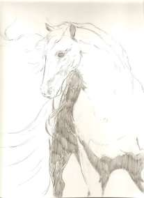 stallion-1-WORDPRESS