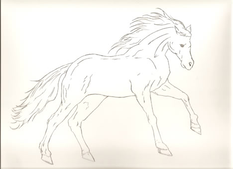 stallion-2-WORDPRESS