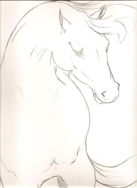 stallion-3-WORDPRESS
