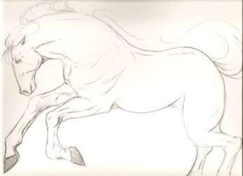 stallion-4-WORDPRESS