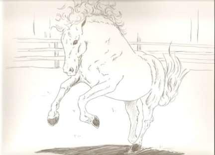 stallion-5-WORDPRESS